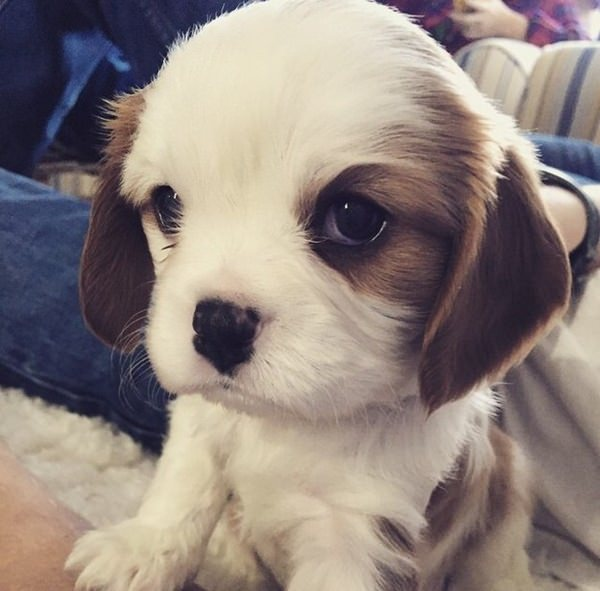 65 cute puppy pictures to brighten your day 30 cute puppies voltagebd Gallery