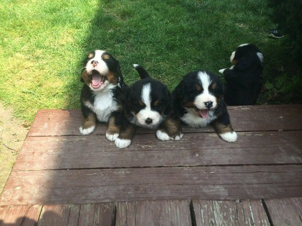 31-cute-puppies