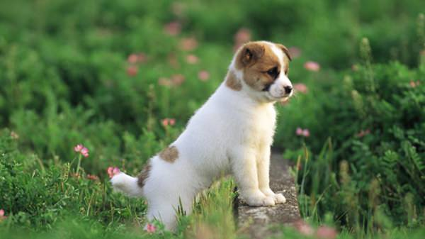 56-cute-puppies