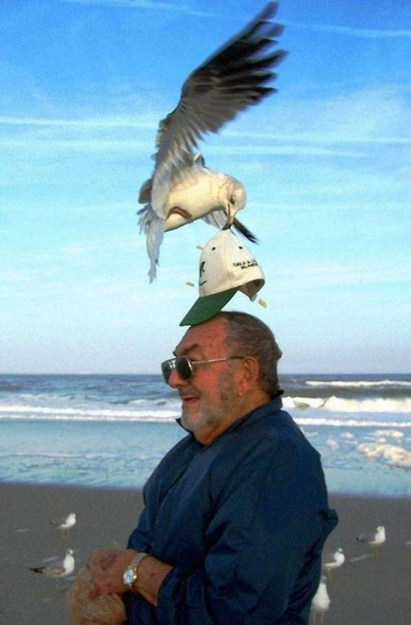 32010216-perfectly-timed-photos